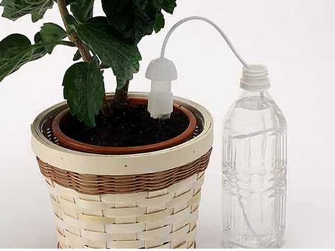 植物育成装置の写真